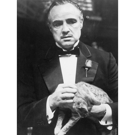 Marlon Brando Cat Alu Art